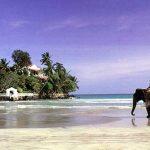 Отдых на Шри-Ланке в октябре